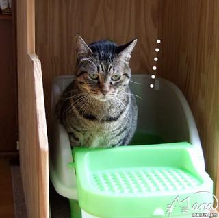 猫トイレ使用中
