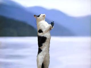 瞑想する猿な猫